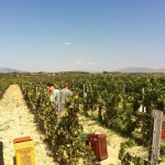 Discover-all-the-secrets-of-a-Greek-winery